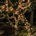 ozdobione lampkami drzewo rosnące w ogrodzie